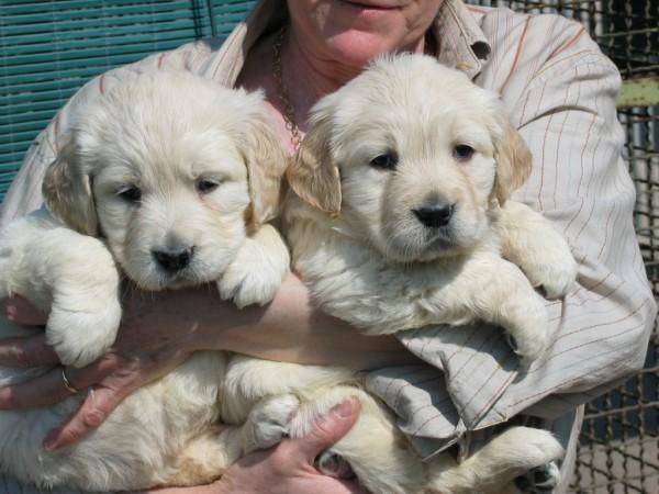 Cuccioli in braccio 2