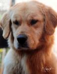 I MIEI VIDEO:...è arrivata la fantastica  cucciolata tutta americana di Haiti
